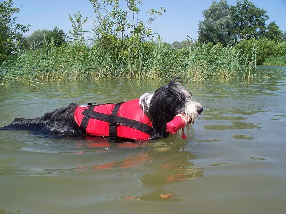 Noty zwemt met zwemvest