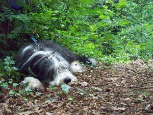 Noty slaapt in het bos
